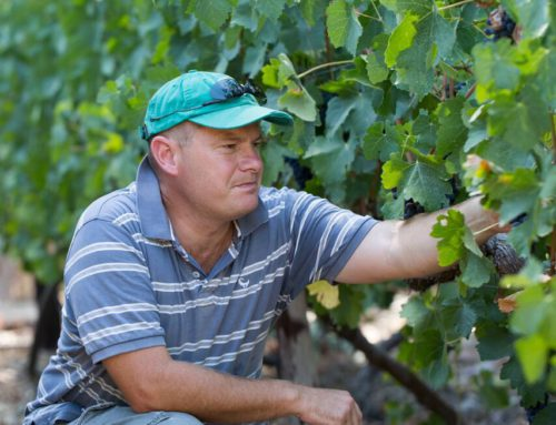 Q&A with Ettienne Malan – winemaker at Andreas Wine Estate